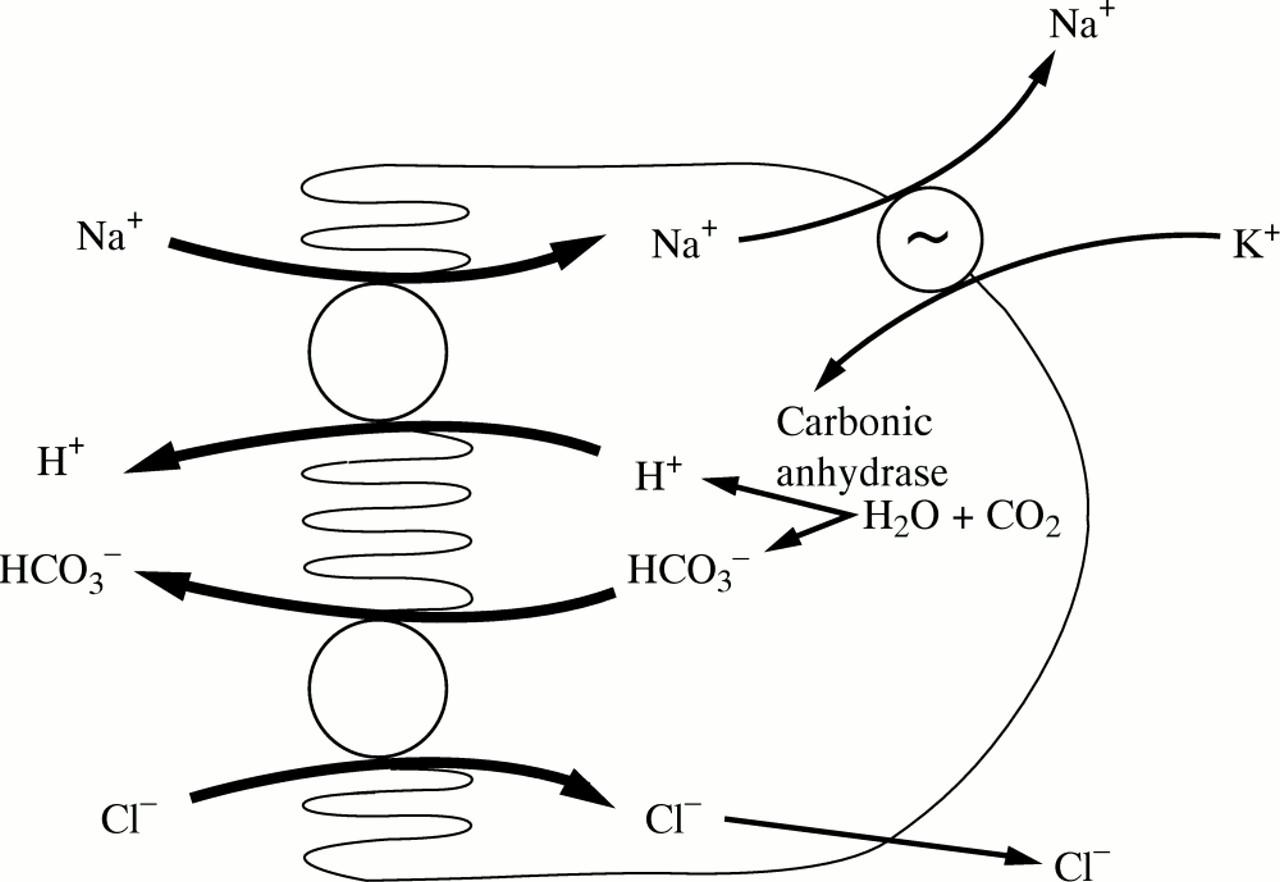 Salt And Water Absorption In The Human Colon A Modern Appraisal Gut