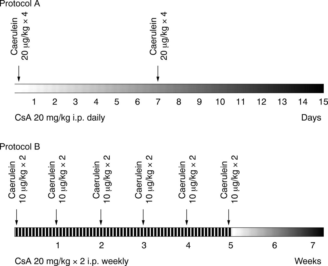 Myofibroblast proliferation, fibrosis, and defective pancreatic ...