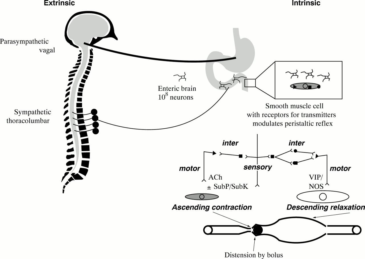 Principles Of Applied Neurogastroenterology Physiologymotility
