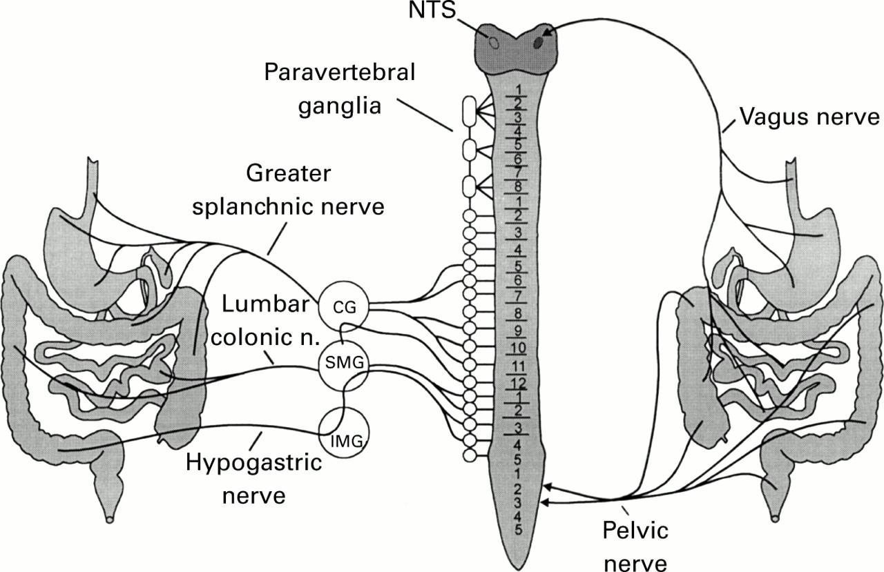 Visceral Painperipheral Sensitisation Gut