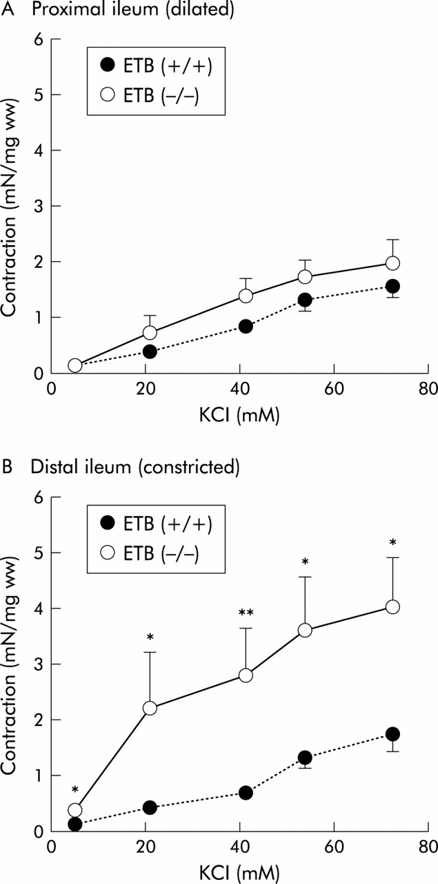 Increased Smooth Muscle Contractility Of Intestine In The Genetic