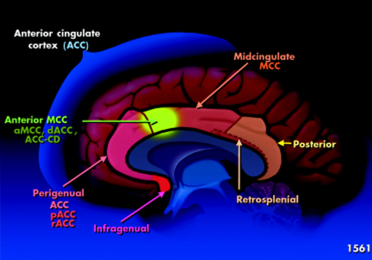 Brain imaging and its implications for studying centrally targeted ...