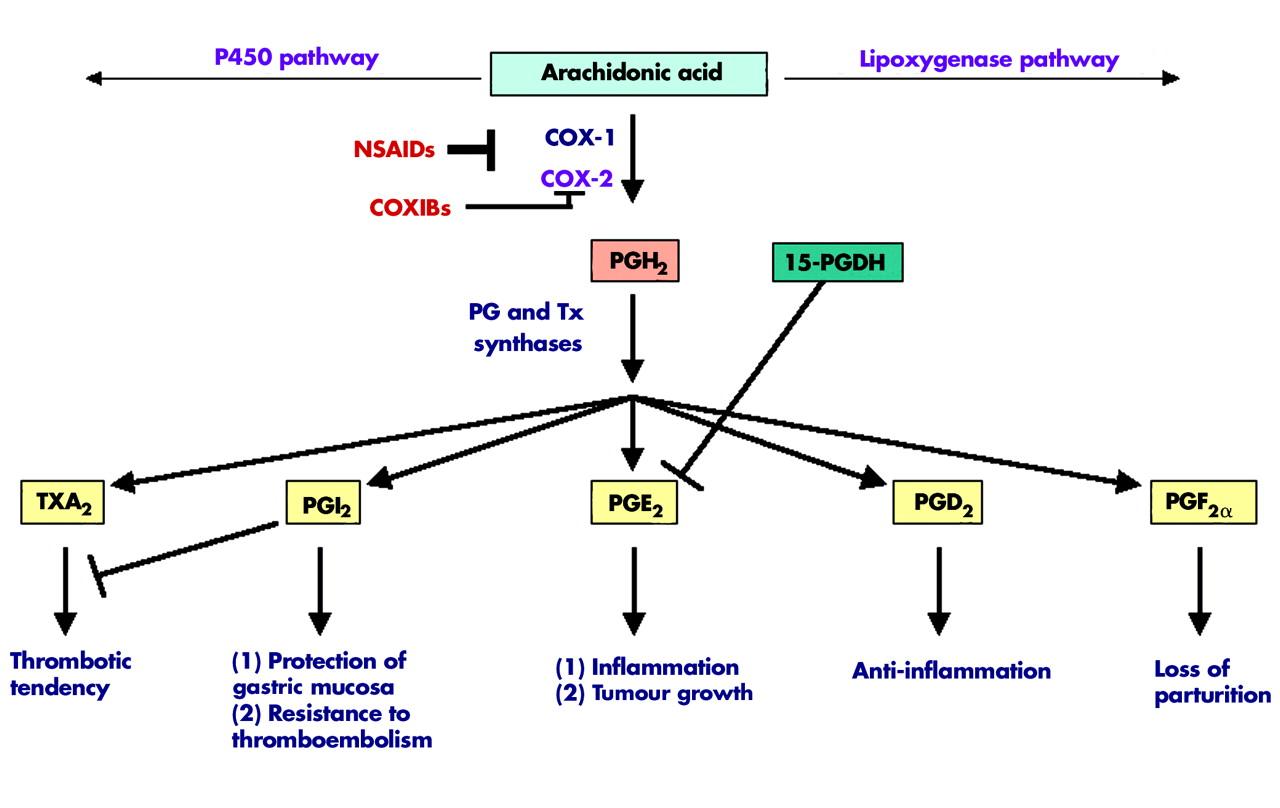 ibuprofen non steroidal anti inflammatory drugs