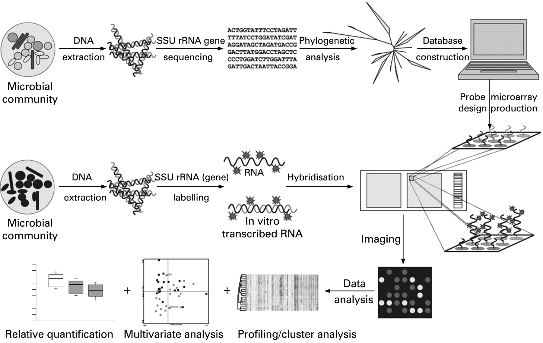 High Throughput Diversity And Functionality Analysis Of The Pump Action Shotgun Diagram Download Figure