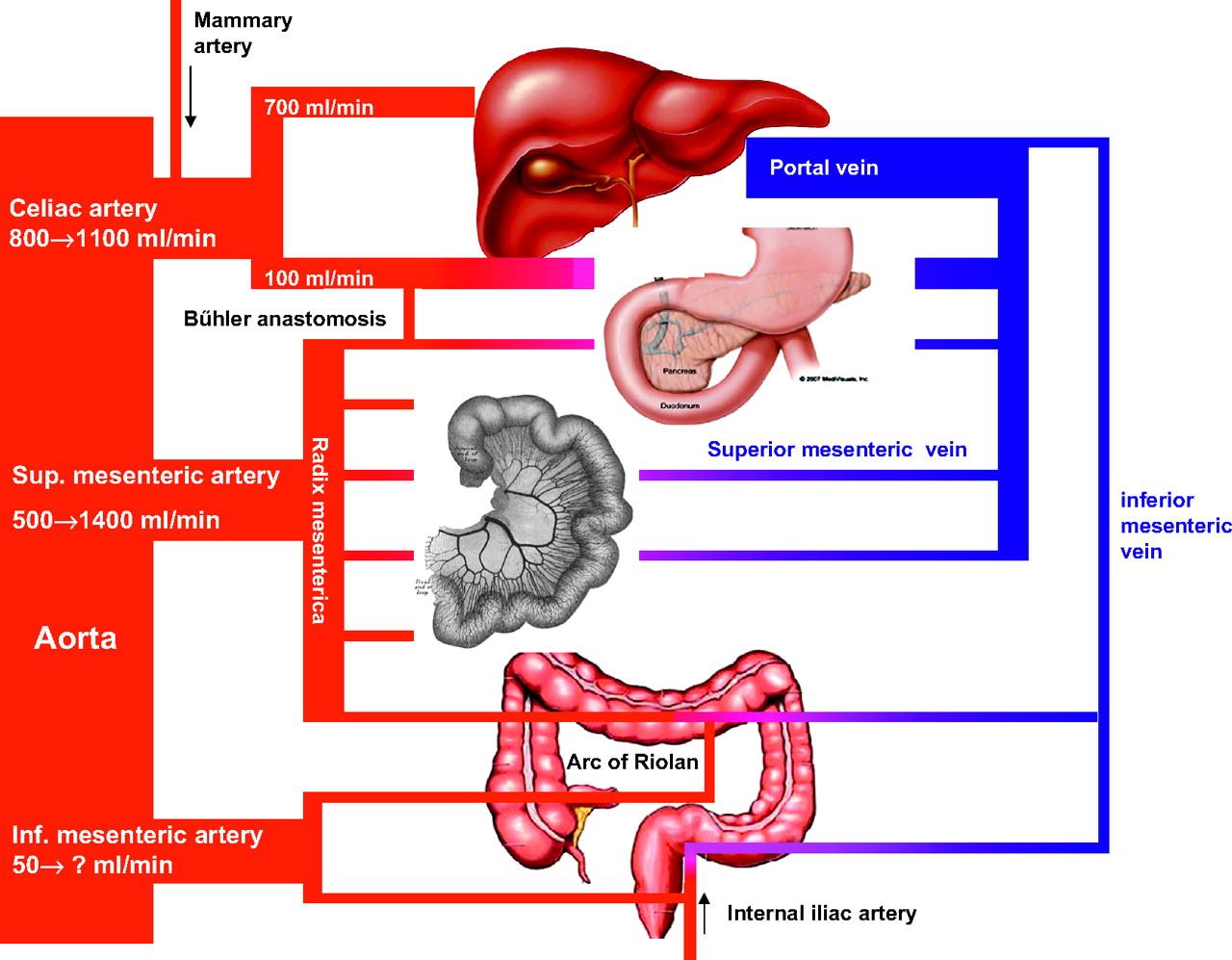 Chronic Gastrointestinal Ischaemia Shifting Paradigms Gut