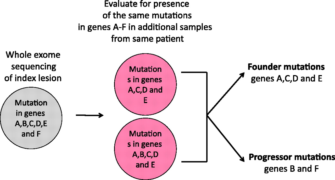Genetic evolution of pancreatic cancer: lessons learnt from the ...