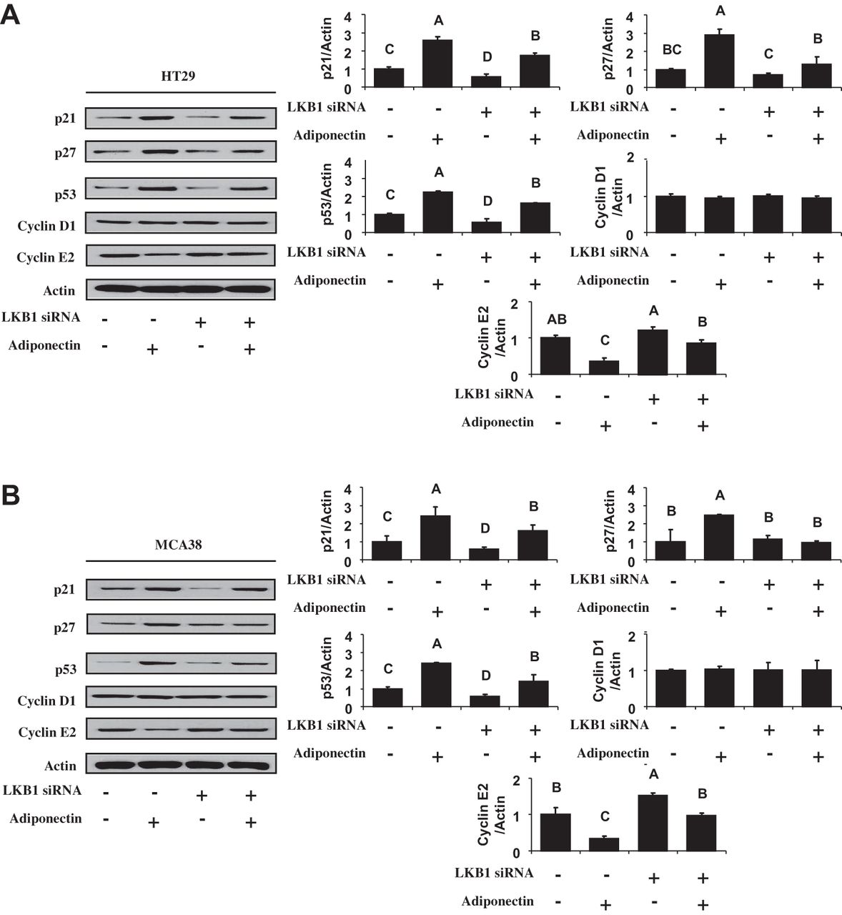Salutary Effects Of Adiponectin On Colon Cancer In Vivo And In Vitro Studies In Mice Gut