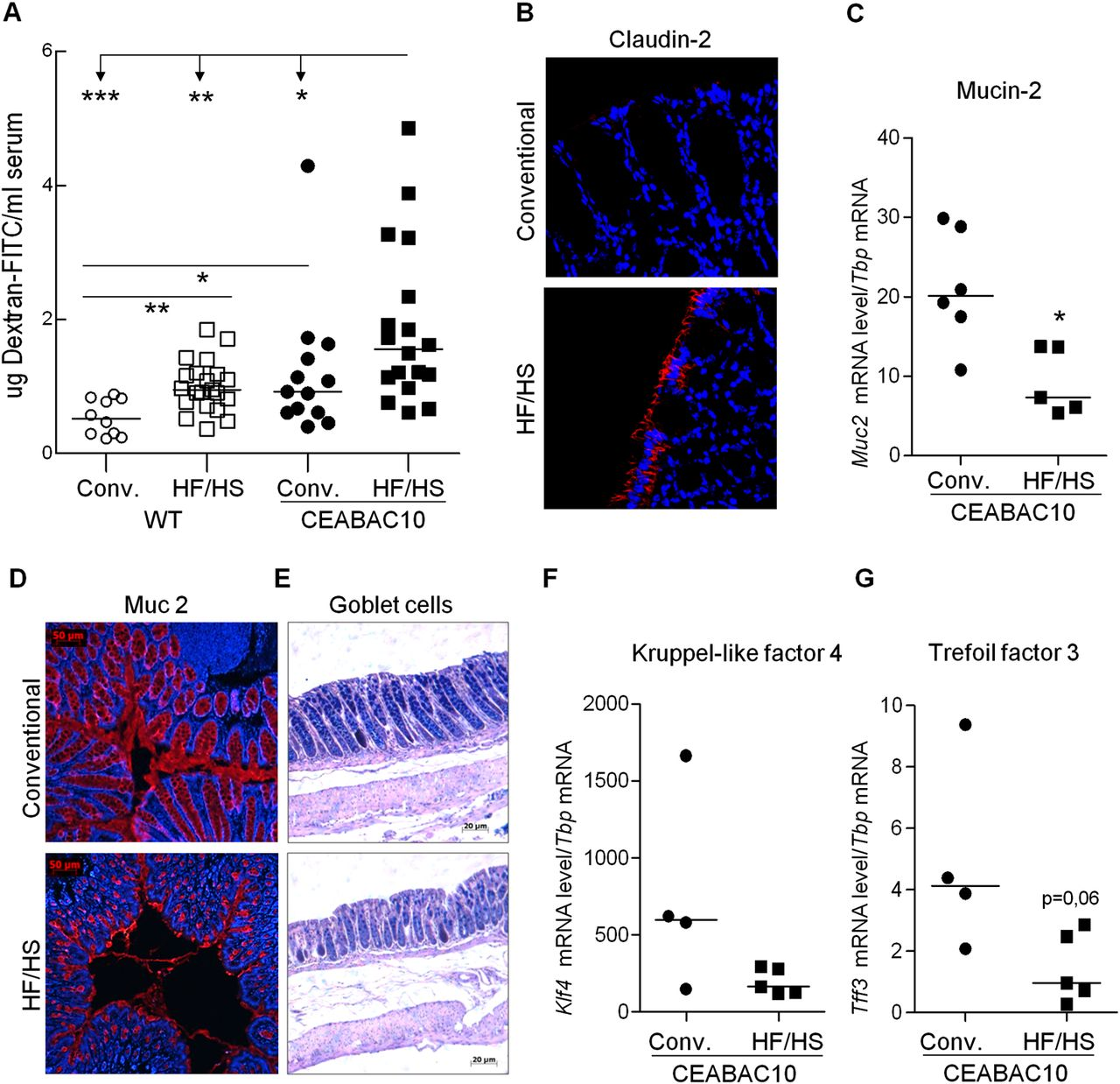 Western Diet Induces Dysbiosis With Increased E Coli In Ceabac10 Mice Alters Host Barrier Function Favouring Aiec Colonisation Gut