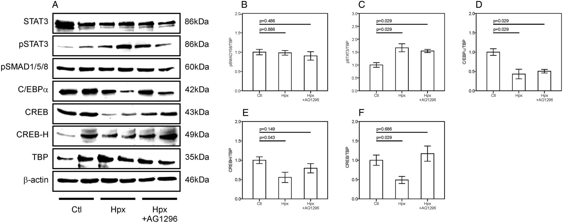Hypoxia Induced Downregulation Of Hepcidin Is Mediated By Platelet Ge 300 Line Control Wiring Diagram Download Figure