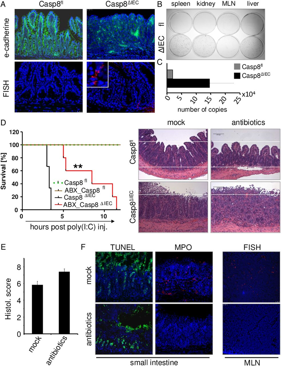 Caspase-8 controls the gut response to microbial challenges