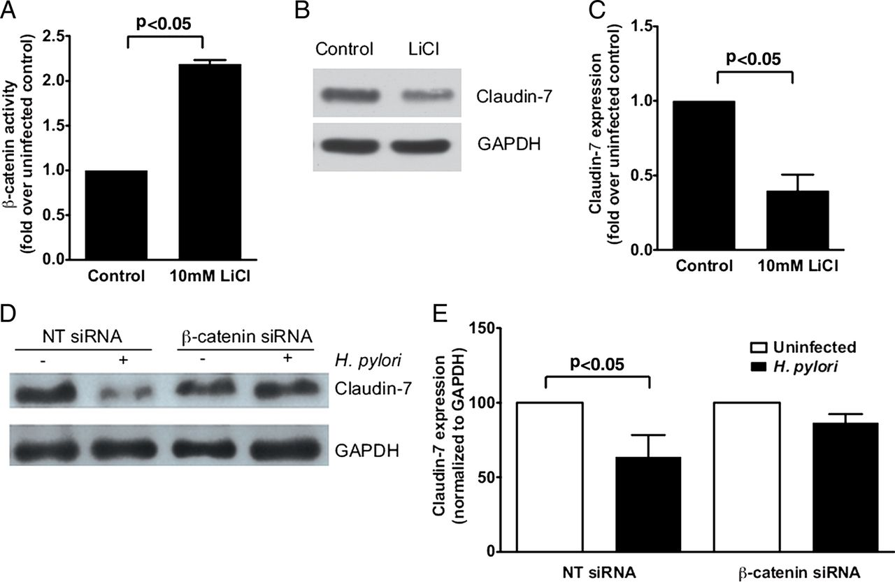 Helicobacter pylori targets cancer-associated apical
