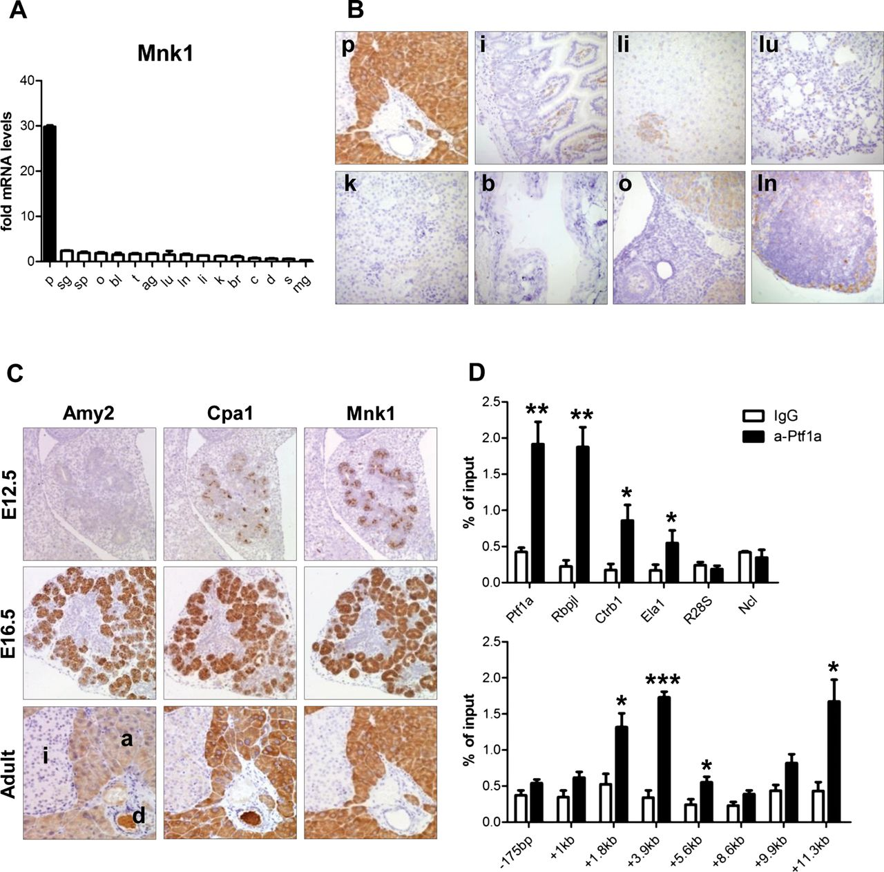 Mnk1 Is A Novel Acinar Cell Specific Kinase Required For Exocrine