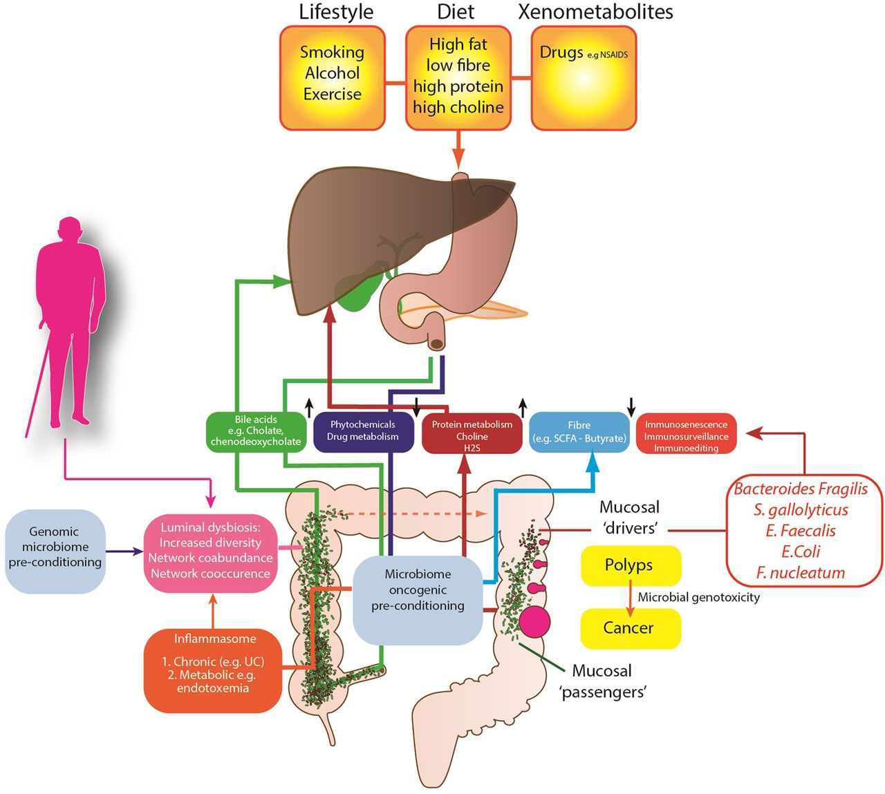 The Gut Microbiota And Host Health A New Clinical
