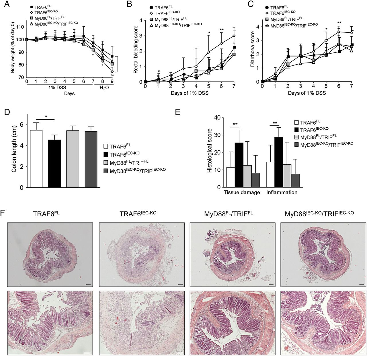 TLR-independent anti-inflammatory function of intestinal