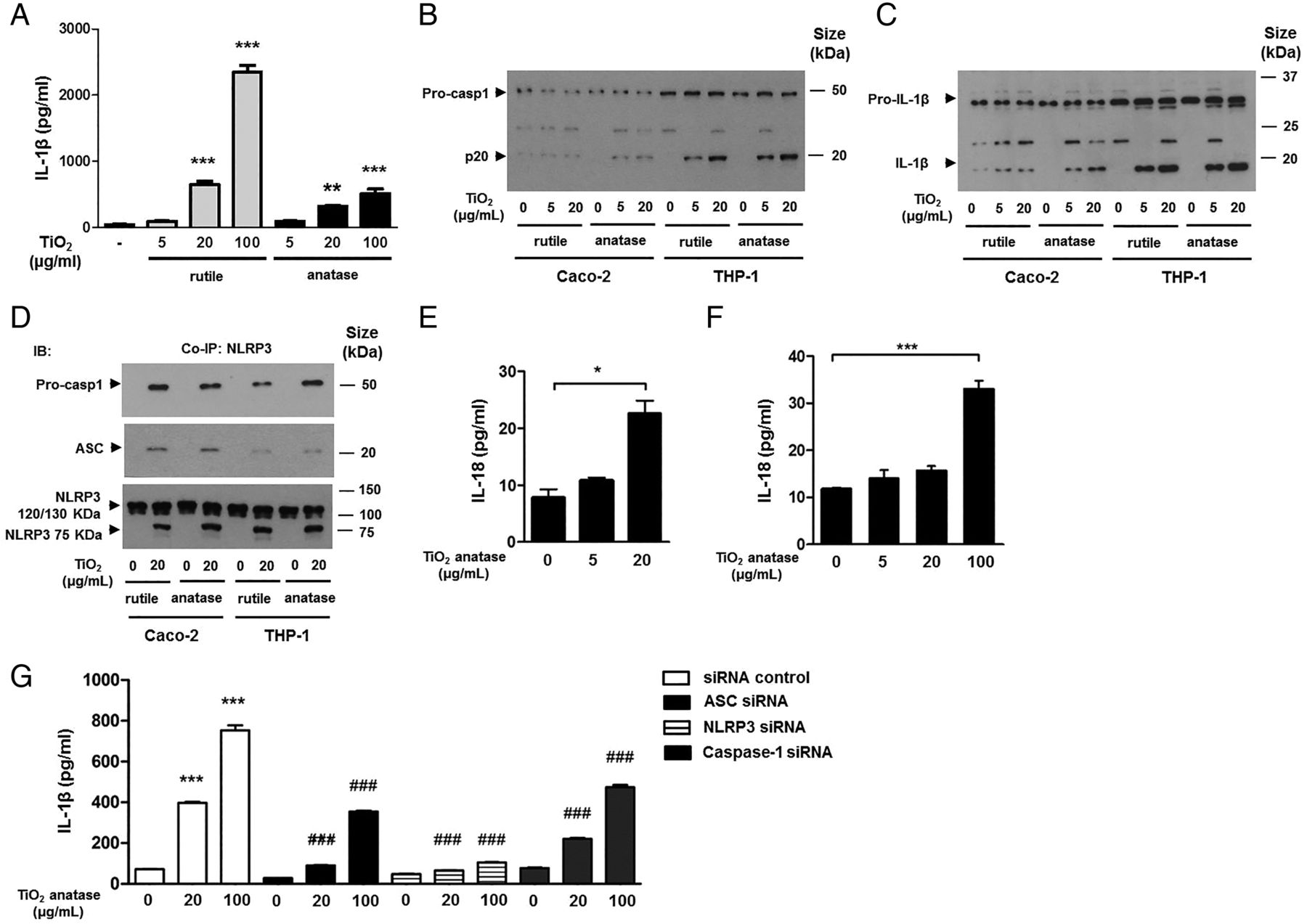 Titanium dioxide nanoparticles exacerbate DSS-induced colitis: role