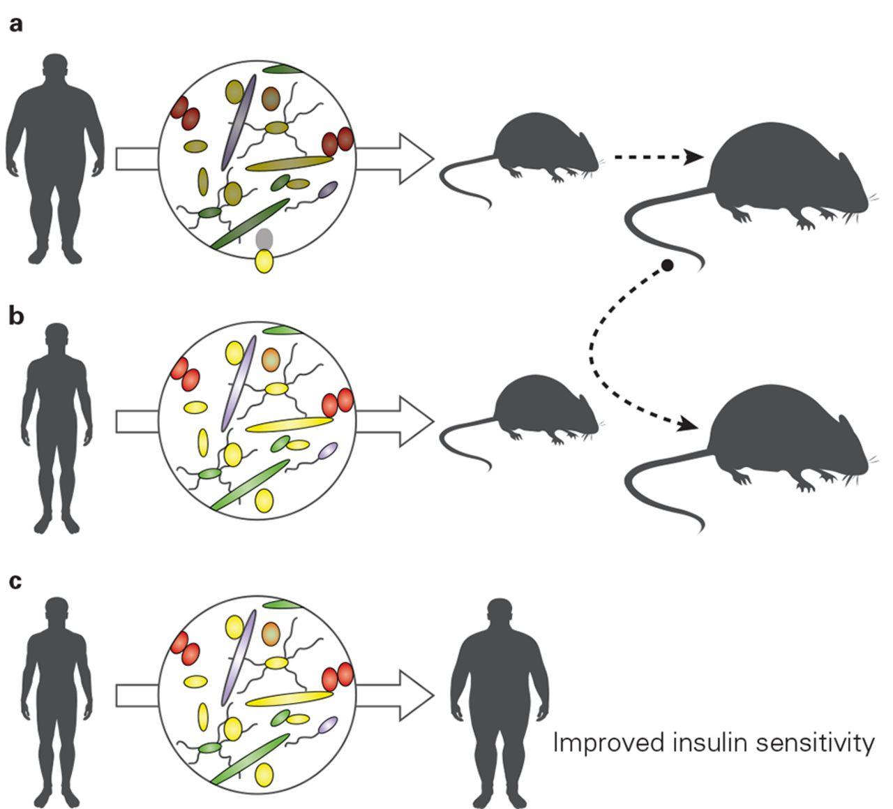 feeding the microbiota  transducer of nutrient signals for