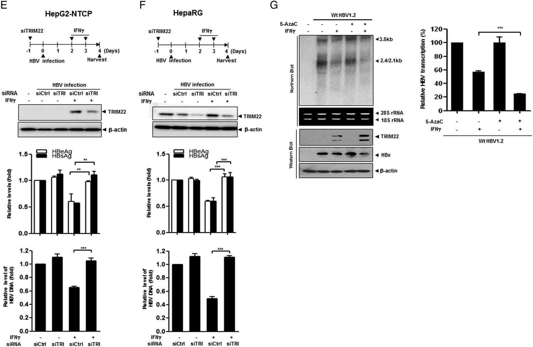 Suppression of interferon-mediated anti-HBV response by single CpG