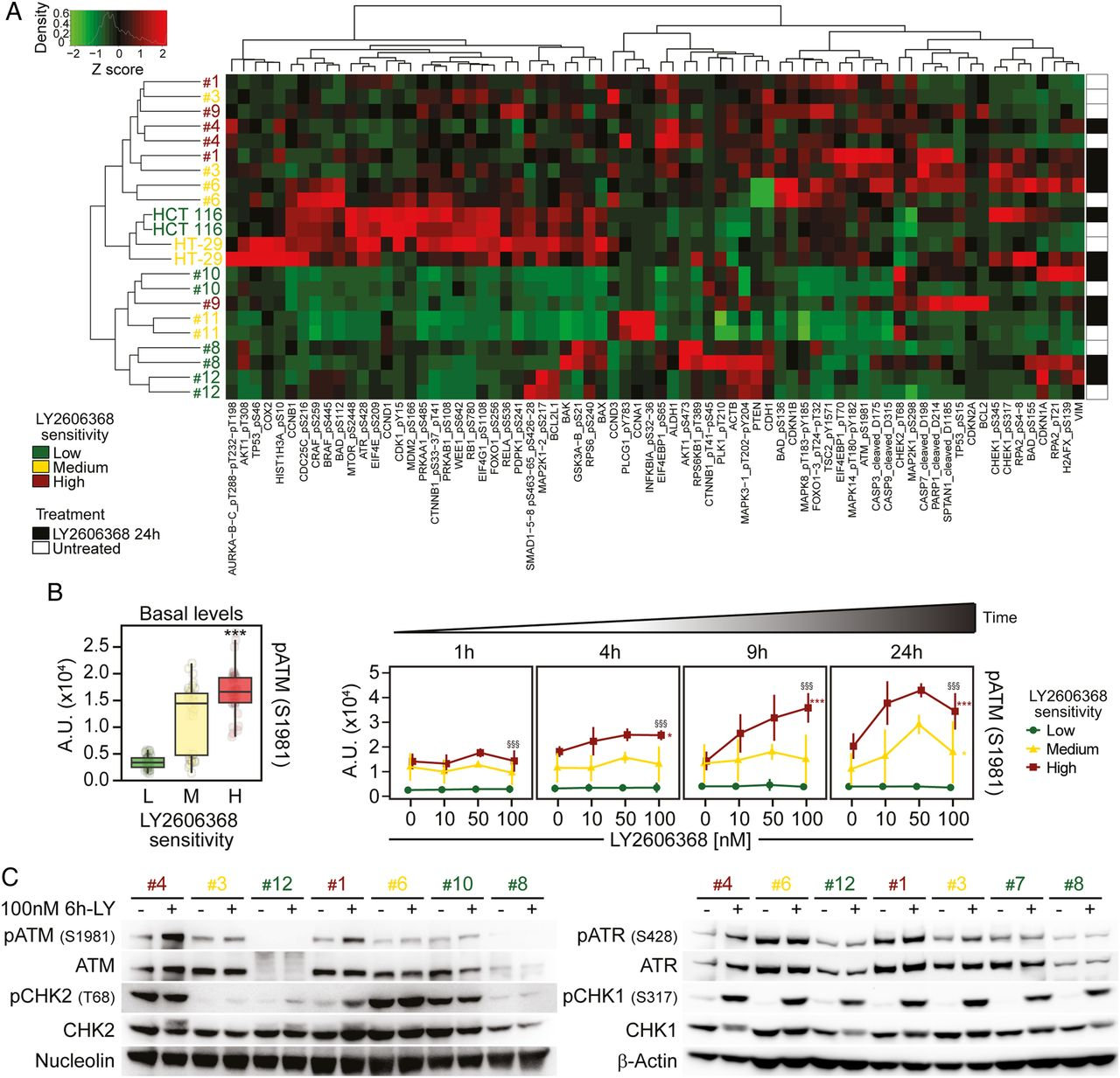 Chk1 Targeted Therapy To Deplete Dna Replication Stressed P53 Deficient Hyperdiploid Colorectal Cancer Stem Cells Gut