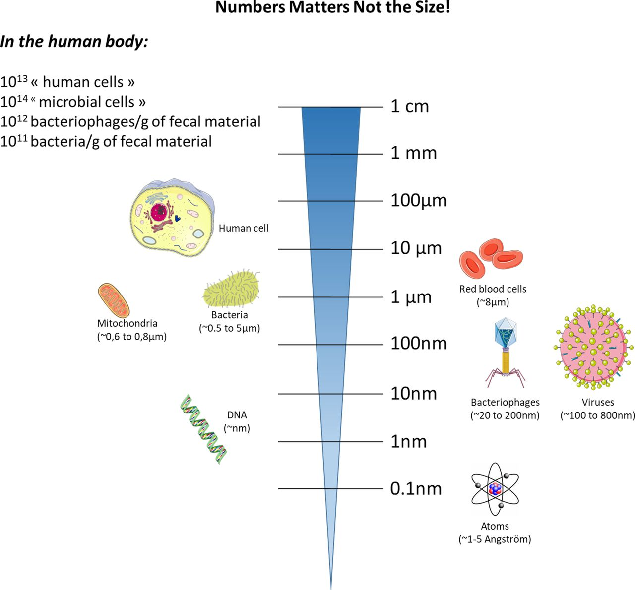 Human gut microbiome: hopes, threats and promises | Gut