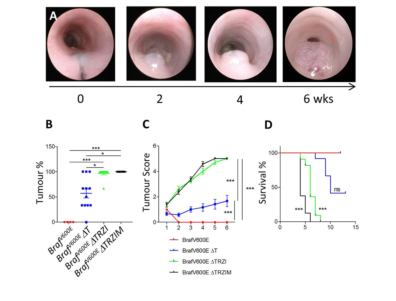 Genetic editing of colonic organoids provides a molecularly