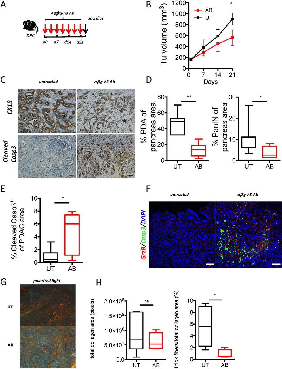 Stromal protein βig-h3 reprogrammes tumour microenvironment
