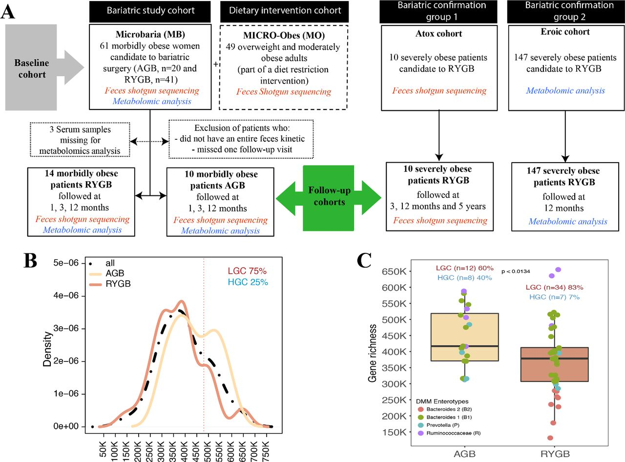 Major Microbiota Dysbiosis In Severe Obesity Fate After Bariatric