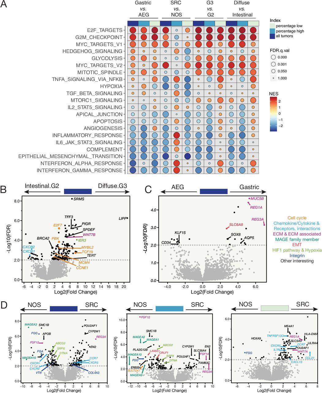 Multiplex profiling of peritoneal metastases from gastric