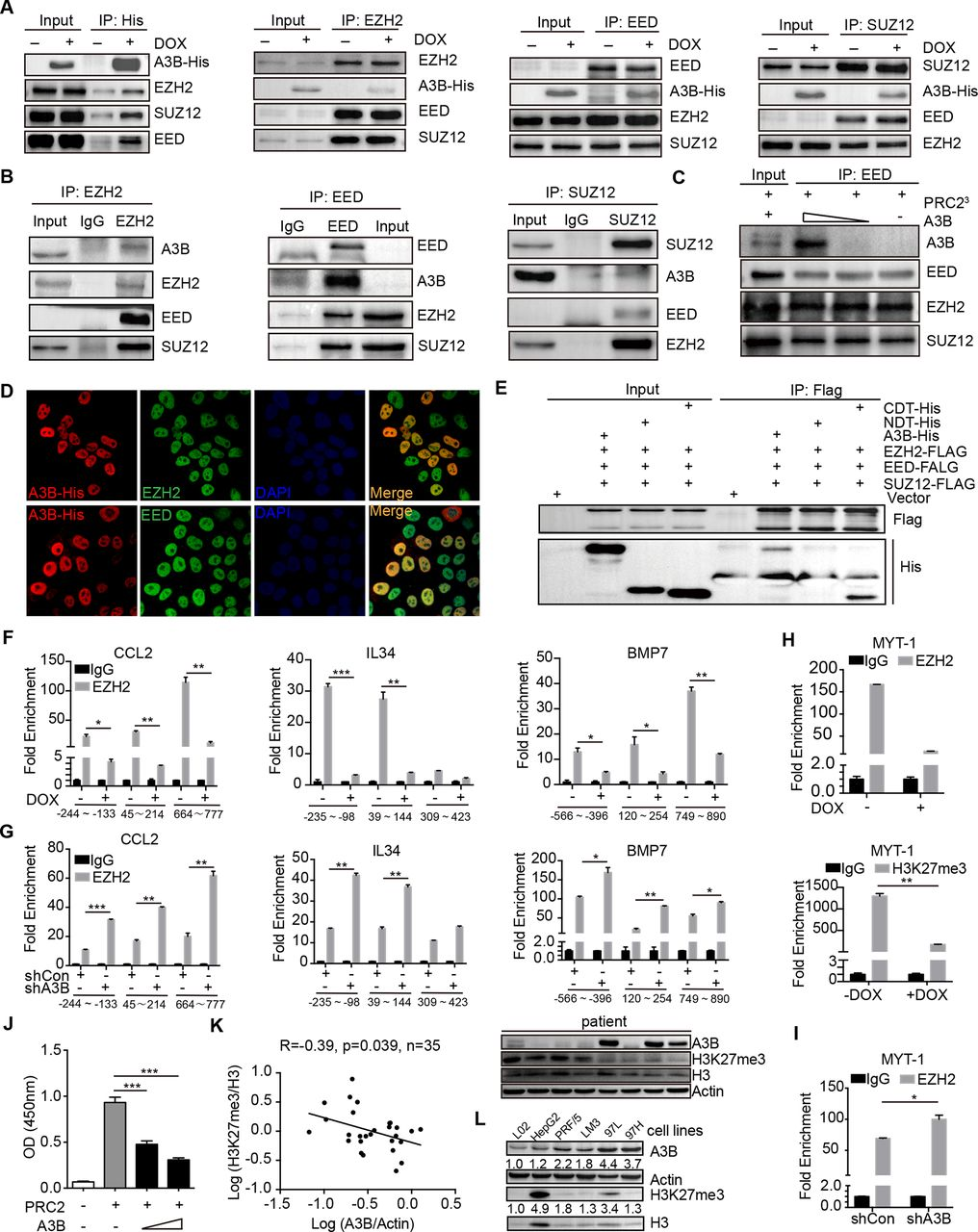 APOBEC3B interaction with PRC2 modulates microenvironment to