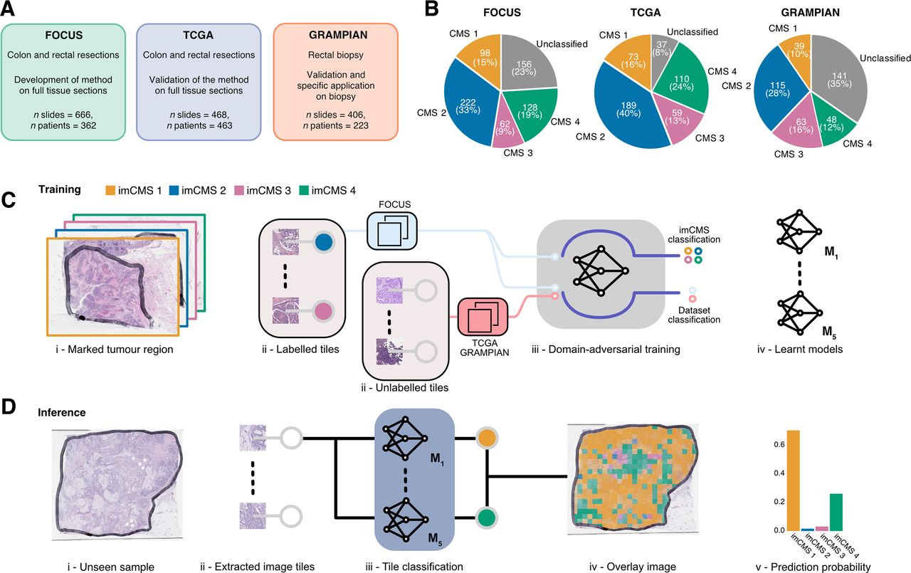 Image Based Consensus Molecular Subtype Imcms Classification Of Colorectal Cancer Using Deep Learning Gut